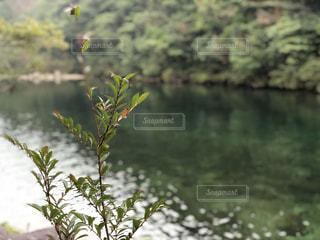 屋久島の森の川辺の写真・画像素材[928316]
