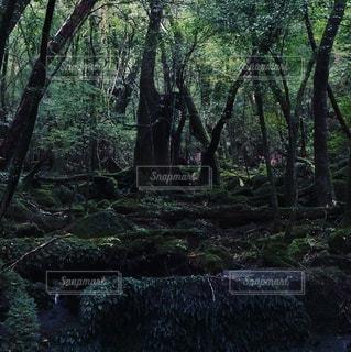 屋久島の森の写真・画像素材[928317]