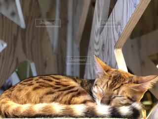 テーブルの上に横たわる猫の写真・画像素材[928319]