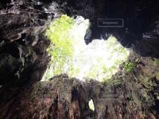 屋久島 屋久杉 ウィルソン株の中から見たハートの写真・画像素材[928383]