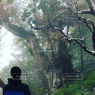 屋久杉の縄文杉を見る人物の写真・画像素材[928431]