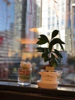 カフェ 窓際に置かれた植物の写真・画像素材[928674]