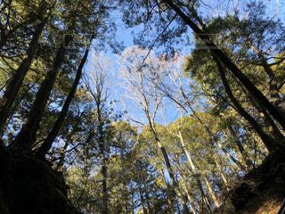 森の中で空を見上げての写真・画像素材[931578]