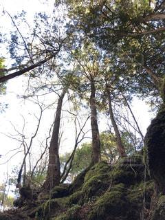 森の木を見上げるの写真・画像素材[931579]