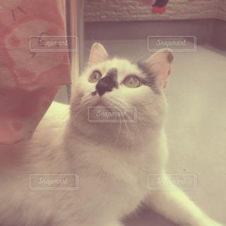 猫と日向ぼっこの写真・画像素材[928344]