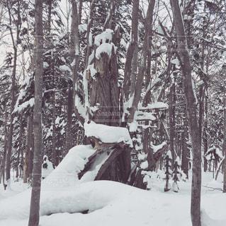 折れた木の写真・画像素材[2312762]