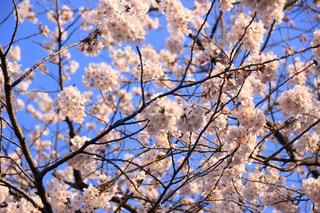 春一番の写真・画像素材[1130741]