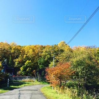 空と木 - No.928954