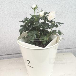 植物の花と白いカップの写真・画像素材[929857]