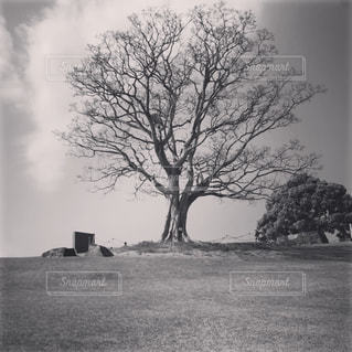 フィールドの真ん中の木の写真・画像素材[2077673]