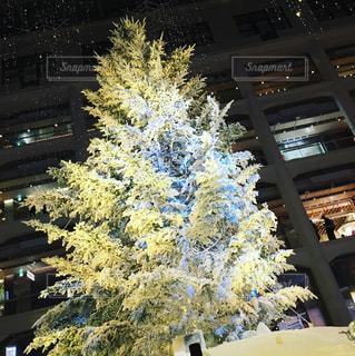クリスマス ツリー - No.929216