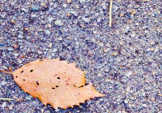 落ち葉がこんにちはの写真・画像素材[935224]