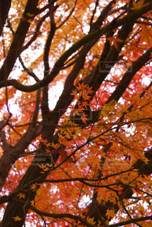 紅葉する木々 - No.935276