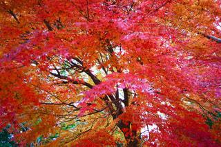 あふれ出す様な葉っぱたちの写真・画像素材[935277]