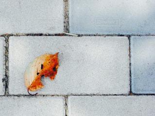 足もとの落ち葉の写真・画像素材[936318]
