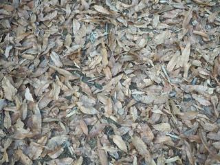 枯れ葉の写真・画像素材[981923]