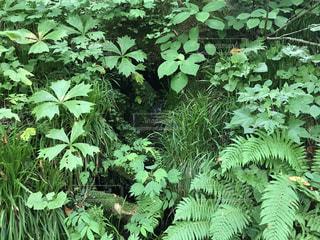 自然の癒し 横の写真・画像素材[1350500]