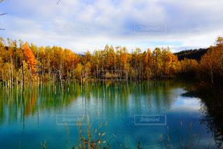 木々 に囲まれた水の体の写真・画像素材[929603]