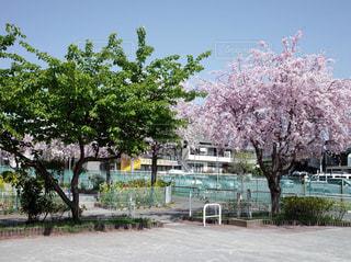 春から夏の写真・画像素材[1104011]