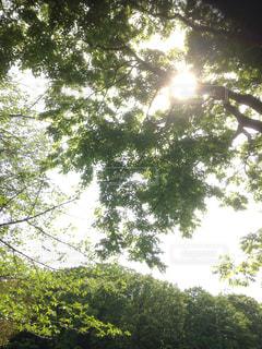 木から差し込む光 - No.930033
