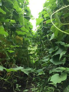 畑のジャングルの写真・画像素材[930315]