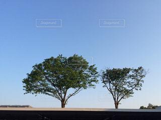 並んだ木の写真・画像素材[931313]