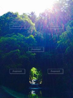 森の中の写真・画像素材[930763]