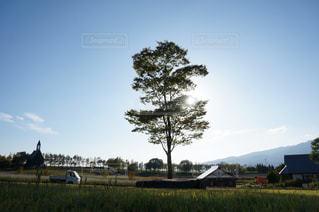 フィールドの大木の写真・画像素材[931392]