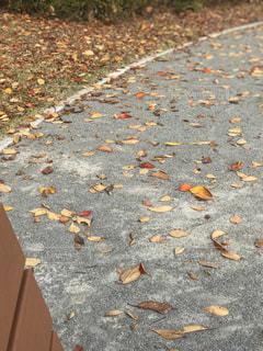 落ち行く葉の写真・画像素材[931477]