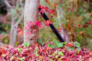 秋の雑木林の写真・画像素材[932292]