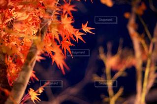 今年最後の秋の写真・画像素材[932293]