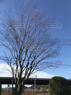 冬景色の写真・画像素材[932204]
