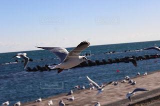海岸を飛ぶカモメの写真・画像素材[985784]