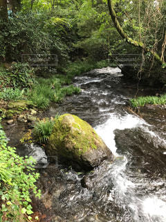 水の森の写真・画像素材[932338]
