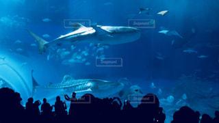 美ら海水族館の写真・画像素材[937703]
