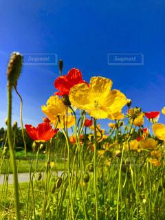 夏の花咲く - No.1176237