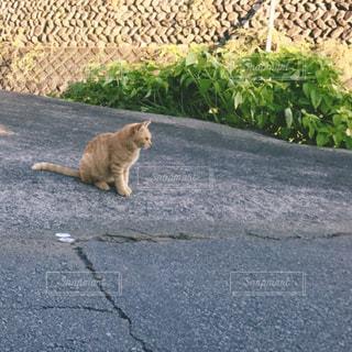 道端のノラ猫の写真・画像素材[933615]