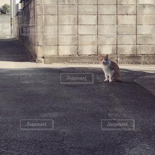 路地裏のノラ猫の写真・画像素材[944238]