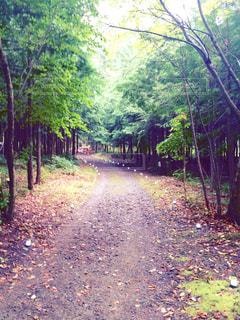 森の散歩道 - No.945451