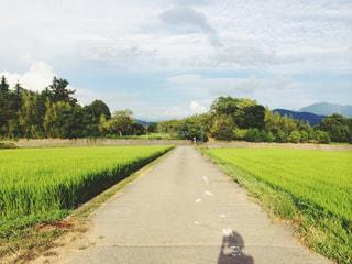 田舎の田んぼ道の写真・画像素材[945454]