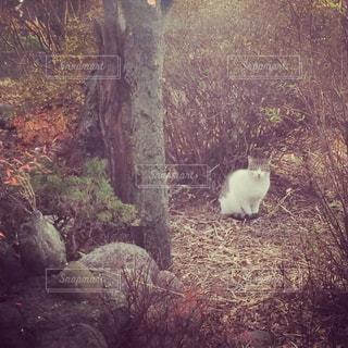 庭の猫の写真・画像素材[945459]