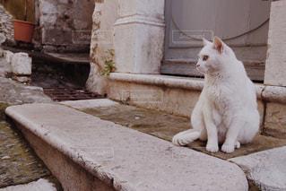 フランスの小さな街の猫の写真・画像素材[947209]