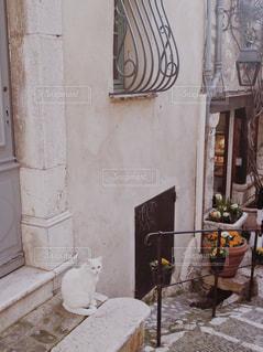 フランスの小さな街の猫の写真・画像素材[947213]