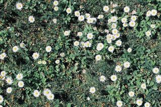 庭の花の写真・画像素材[947248]