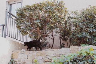 フランスの田舎の猫の写真・画像素材[947250]