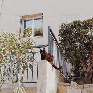フランスの田舎の猫の写真・画像素材[947251]
