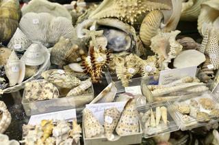 フランス蚤の市で見つけた貝殻の写真・画像素材[954522]