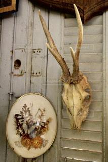フランス蚤の市で見つけた骨の写真・画像素材[954523]