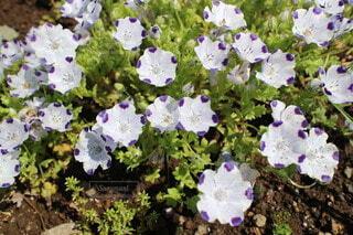花のクローズアップの写真・画像素材[4324877]
