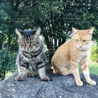公園の猫の写真・画像素材[4331371]